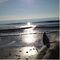 Kristen Peck Horse Beach